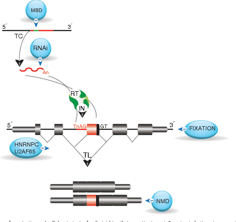 On the path to genetic novelties insights from programmed dna figure 2 ccuart Images