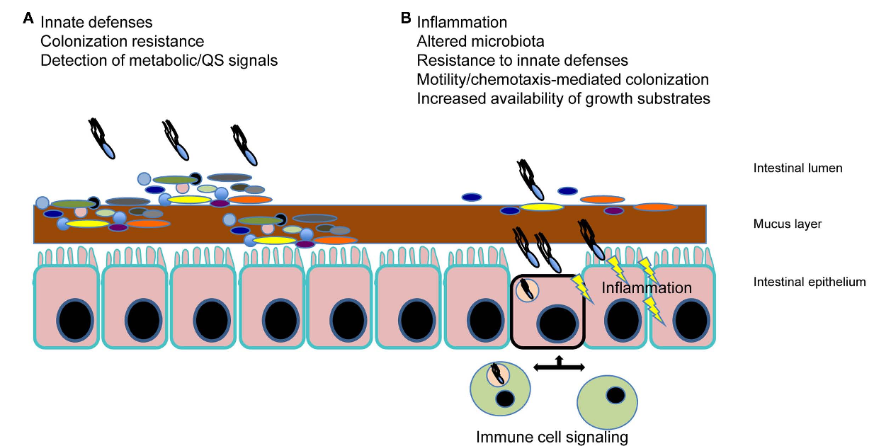 Figure 1 From Interaction Of Salmonella Spp With The Intestinal Figure1 Color Sensor Circuit