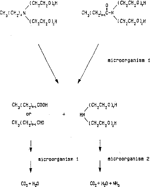 Figure 4 from Biodeeradabilitv of Ethoxvlated Fattv &mines