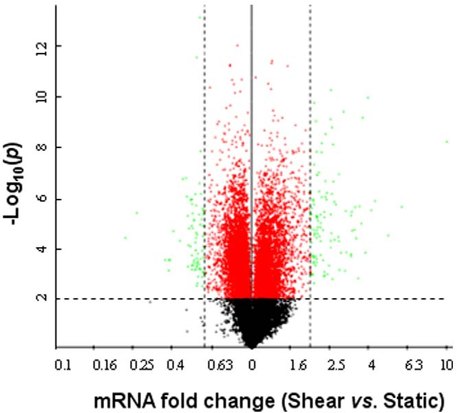 Figure 1. Volcano plot of microarray data. T/C-28a2 chondrocytes were subjected to fluid shear (20 dyn/cm2) or static control (0 dyn/cm2) conditions for 48 h or 72 h. Three paired samples for each time point were obtained for microarray analysis. The negative log10-transformed p-values of the Student's t-test are plotted against the shear to static ratios of fold change in the six-sample experiment. The horizontal bar represents the nominal significant level 0.01 for the Student's t-test (p#0.01 for 61% of all ESTs represented by the red and green points). The vertical dashed bars denote #0.6-fold downregulation (left) or $2.0-fold upregulation (right). doi:10.1371/journal.pone.0015174.g001