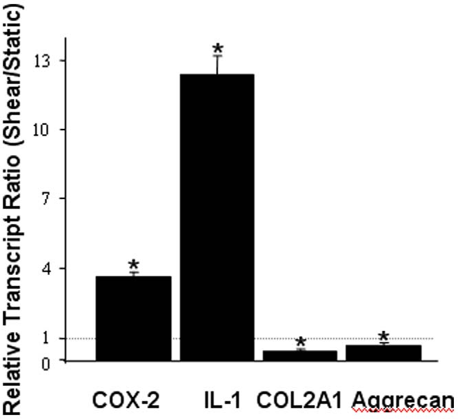 Figure 3. High shear stress induces gene markers of osteoarthritis in human chondrocytes. T/C-28a2 chondrocytes were subjected to fluid shear (20 dyn/cm2) or static conditions (0 dyn/cm2) for 48 h. qRT-PCR was used to quantify the mRNA transcript ratios of select genes in sheared compared to static control chondrocytes. Data represent the mean6S.D. of n$3 independent experiments. doi:10.1371/journal.pone.0015174.g003