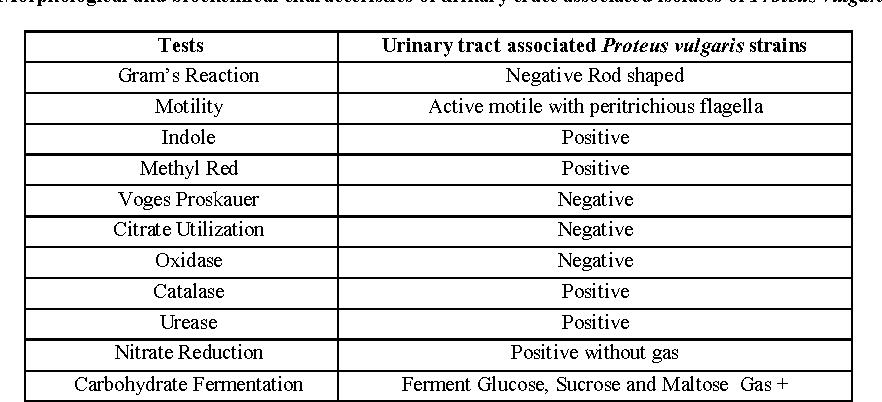 proteus vulgaris gram stain