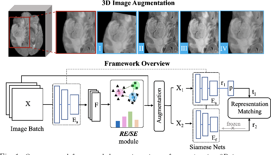 Figure 1 for Imbalance-Aware Self-Supervised Learning for 3D Radiomic Representations