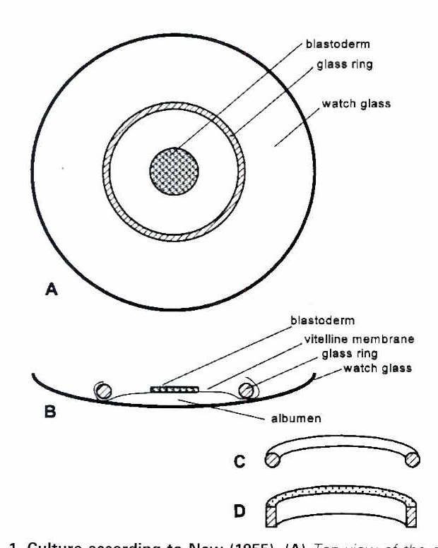 Figure 1 From Early Chick Embryos In Vitro