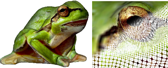 Figure 13: Adaptive resolution can provide more resolution to important features like the eye of the frog.