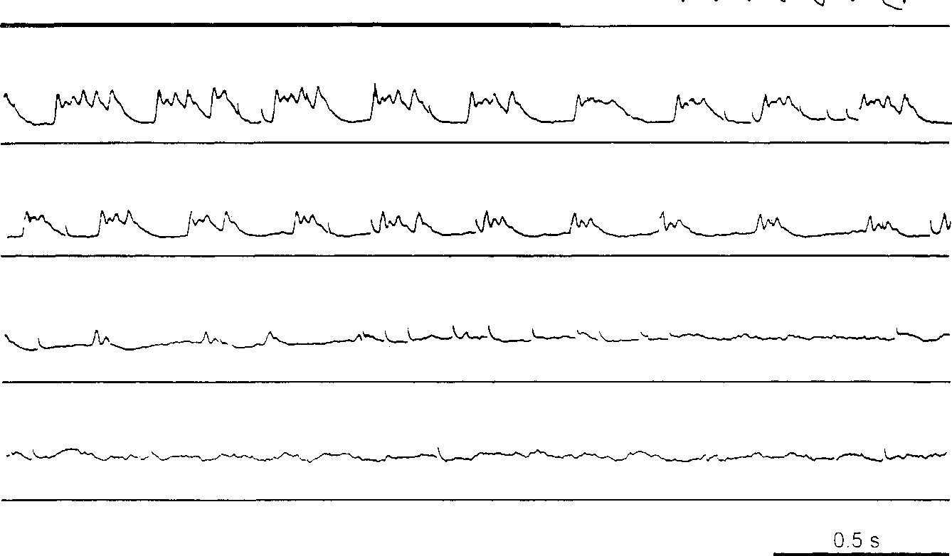 Figure 3 From Synaptic Excitation Of Principal Cells In The Cat S