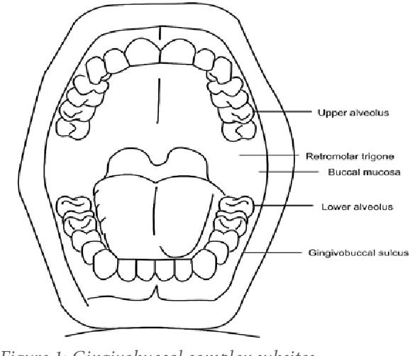 Diagram Lip Mucosa - Catalogue of Schemas on
