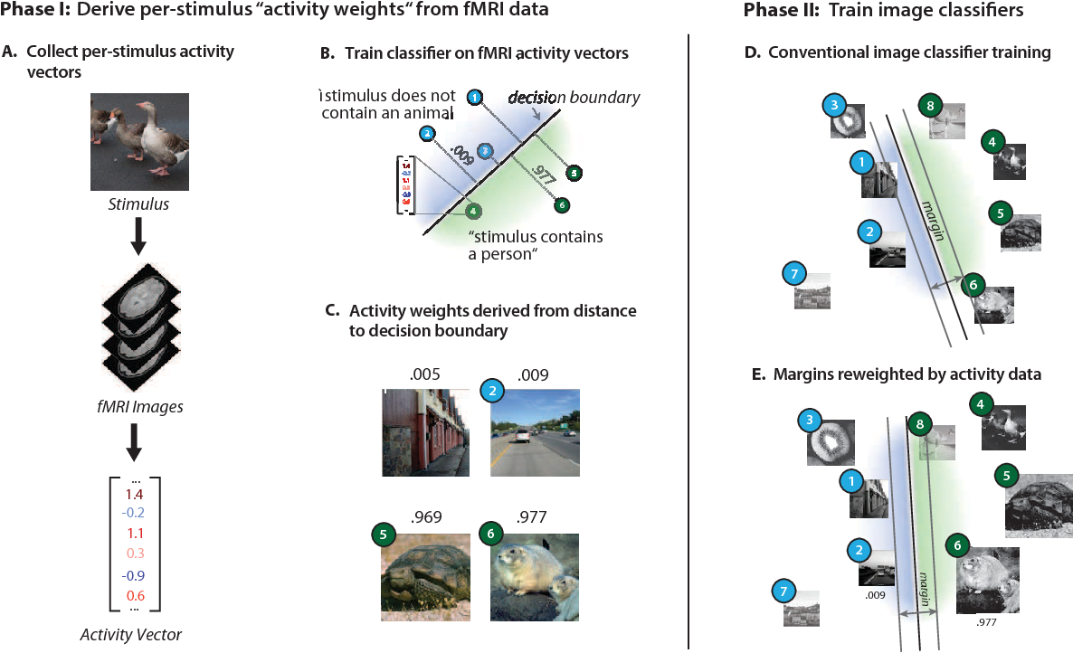 Figure 1 for Using Human Brain Activity to Guide Machine Learning