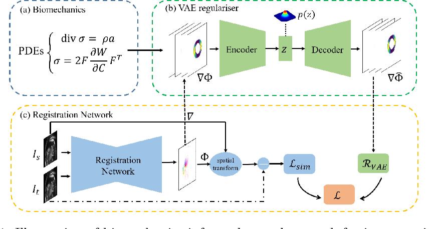 Figure 1 for Biomechanics-informed Neural Networks for Myocardial Motion Tracking in MRI