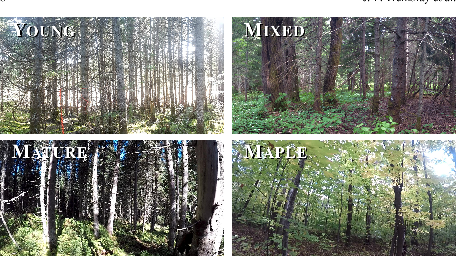 Figure 3 for Automatic 3D Mapping for Tree Diameter Measurements in Inventory Operations