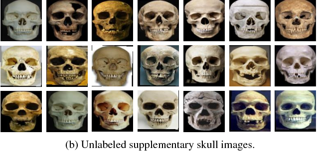 Figure 4 for On Matching Skulls to Digital Face Images: A Preliminary Approach