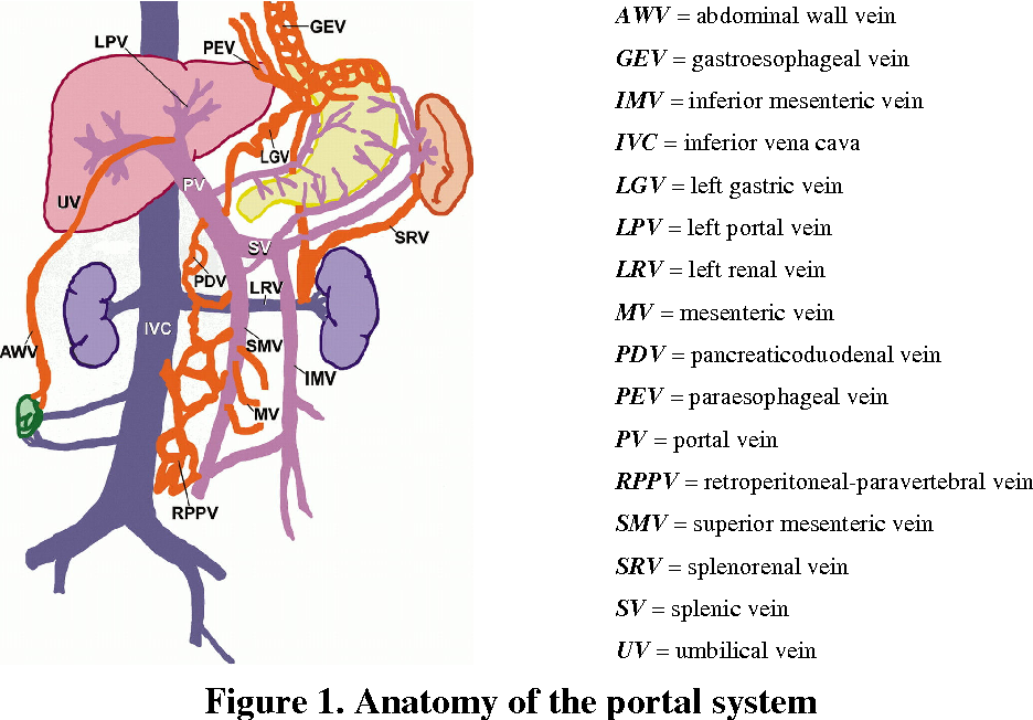 New Minimal Invasive Therapeutic Options in the Management of Acute ...