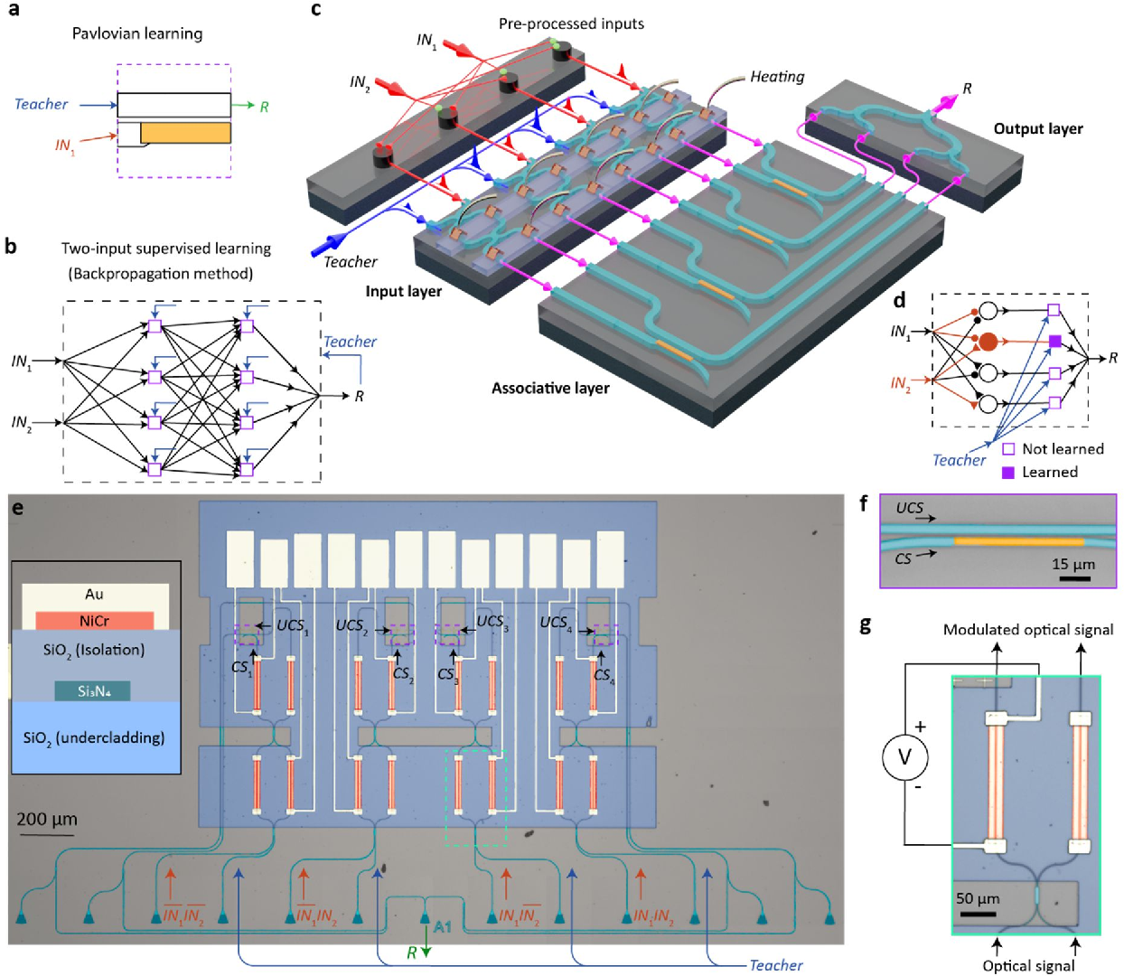 Figure 4 for Monadic Pavlovian associative learning in a backpropagation-free photonic network