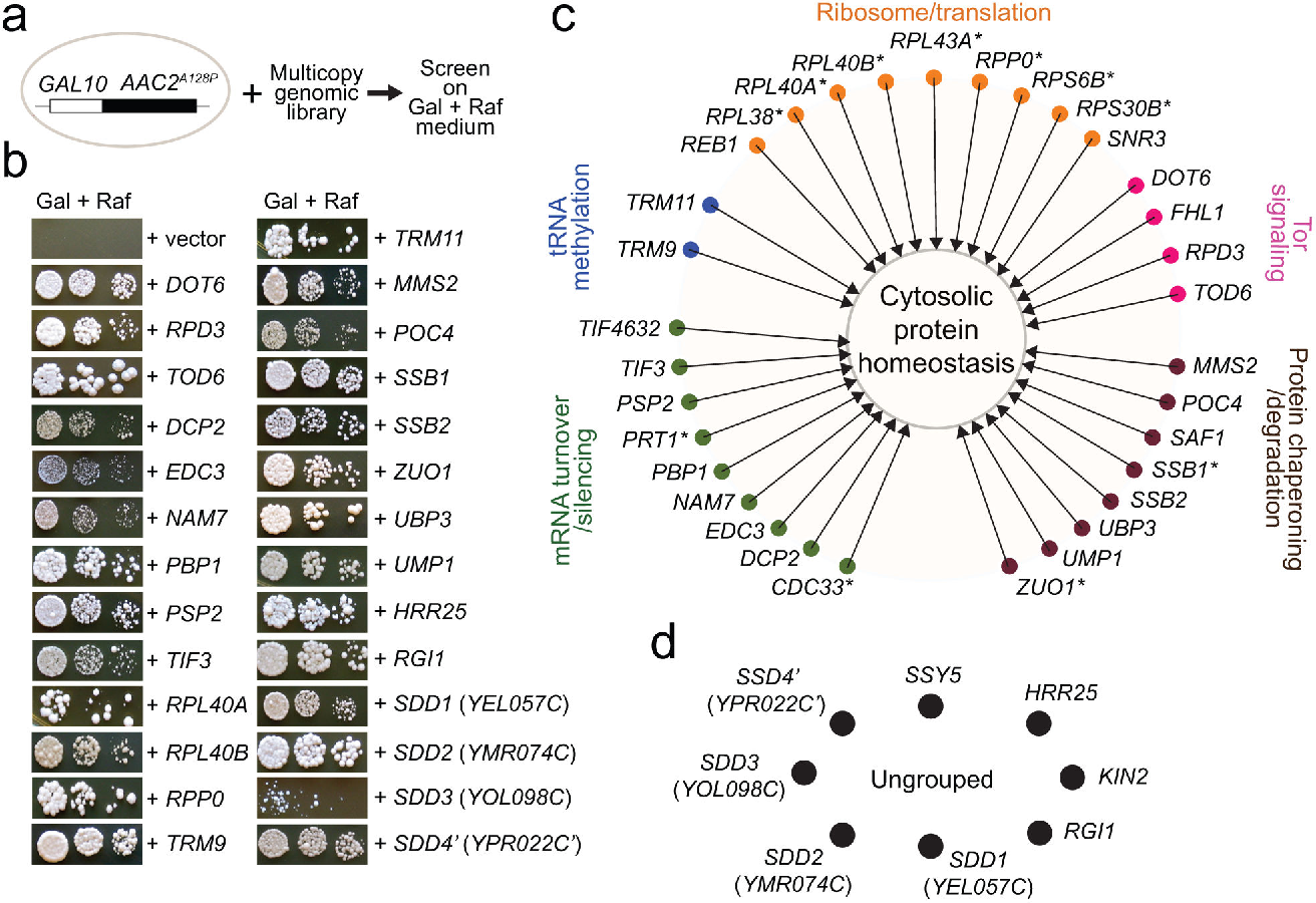 A Cytosolic Network Suppressing Mitochondria Mediated Proteostatic Buy 3 Get 1 Free Galten Figure