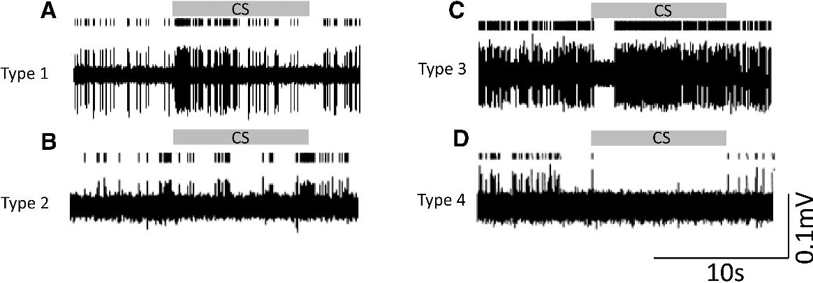 Figure 4. Different types of response of units in PAG. Shown are examples of the different patterns of response to the CS during EE (tone block 1, gray horizontal bar CS, conditioned stimulus). A, Type 1, increasedfiring. B,Type2,nosignificantchangeinfiring. C,Type3,biphasicresponse. D,Type4,decreasedfiring.Examples in A and C wereunits locatedinthedPAGandexamples in B and D wereunits locatedinthevPAG.