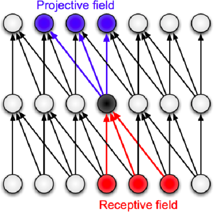 Figure 1 for What are the Receptive, Effective Receptive, and Projective Fields of Neurons in Convolutional Neural Networks?