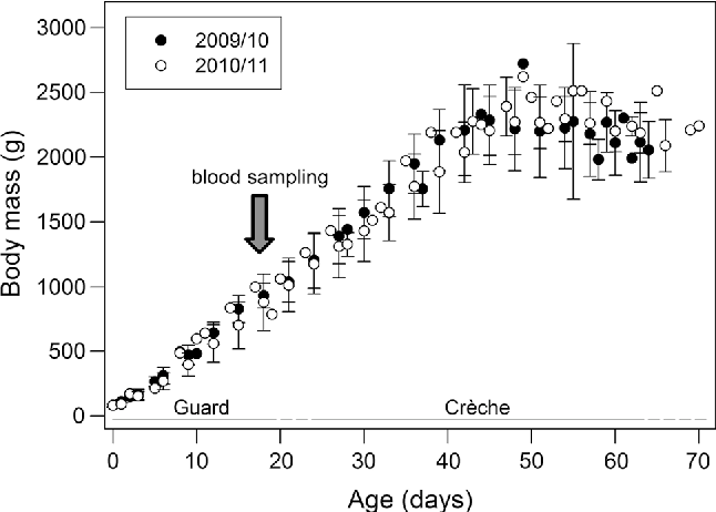 Fig. 3 Body mass increase (mean ± SD) of southern rockhopper penguin (Eudyptes chrysocome chrysocome) chicks with age. Only chicks that survived until fledging were included (n = 22 in each year). The timing of blood sampling for isotope analyses (on day 18) is indicated with an arrow