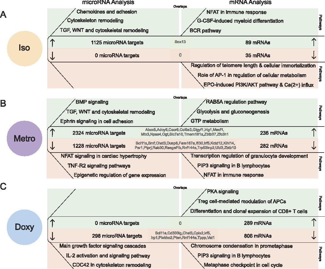 Doxycycline, metronidazole and isotretinoin: Do they modify