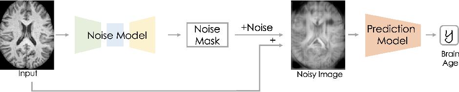 Figure 1 for Voxel-level Importance Maps for Interpretable Brain Age Estimation