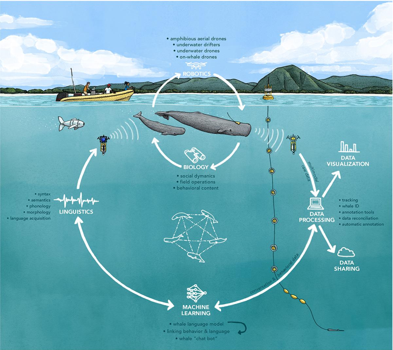 Figure 1 for Cetacean Translation Initiative: a roadmap to deciphering the communication of sperm whales