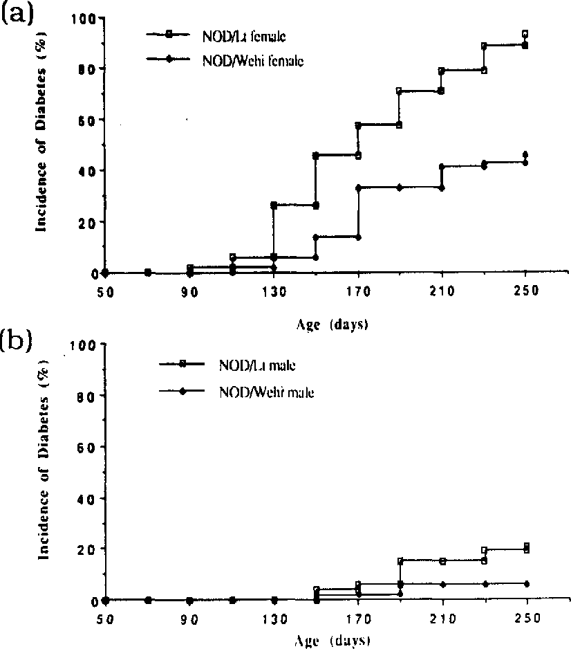 Figure 2 Proportion oTNOD/Lt and NOD/Wehi female mice to develop diabetes before 250 days of age. Diabetes was detined as random serum glucose greater than I2 mMol/ l followed by either rapid demise or further raised glucose estimations. Serum glucose estimations were performed at two-weekly intervals.
