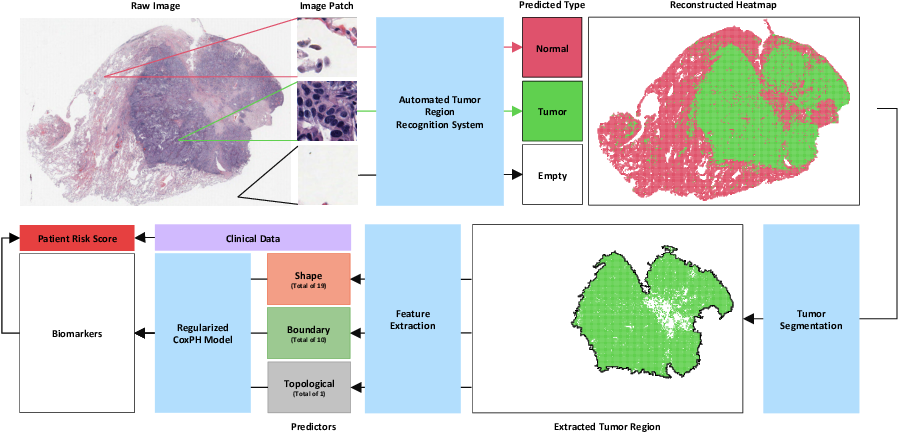 Figure 1 for Discovering Clinically Meaningful Shape Features for the Analysis of Tumor Pathology Images