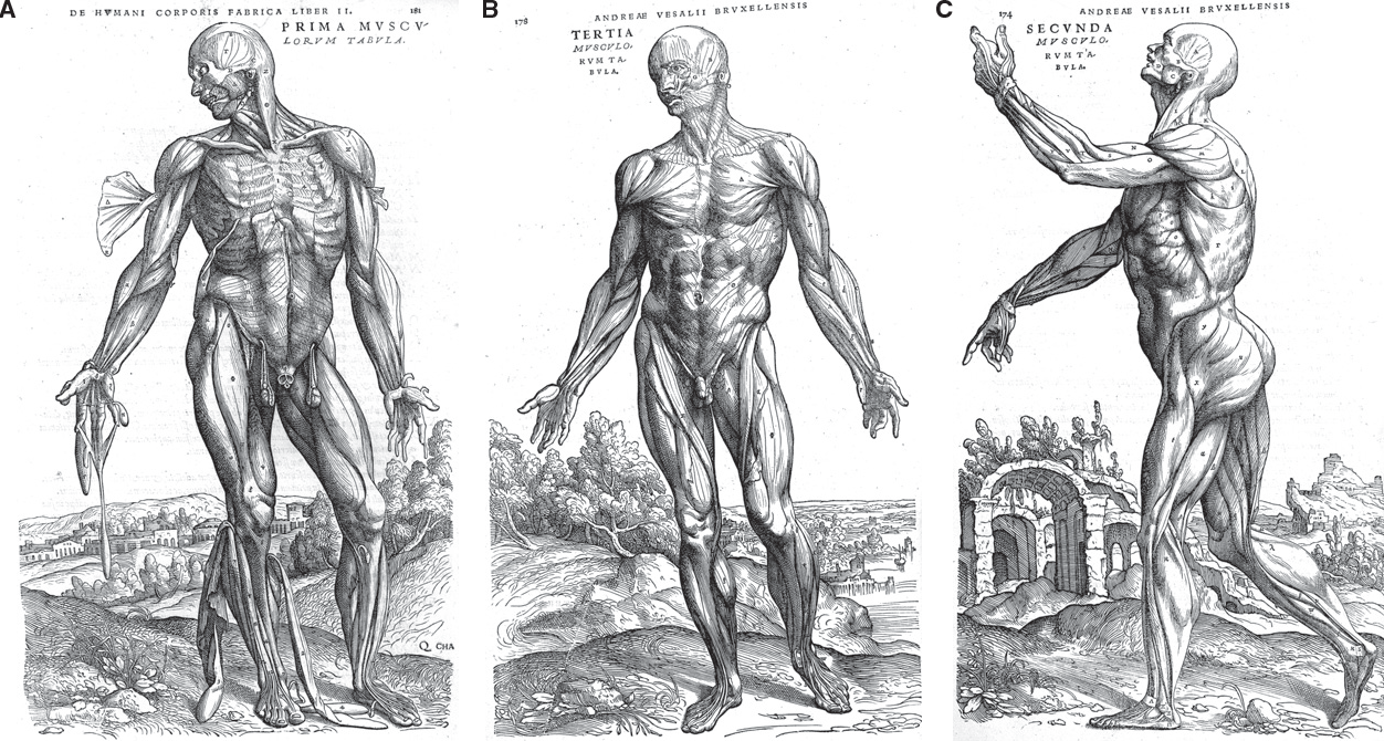 Figure 6 from A brief history of topographical anatomy. - Semantic ...