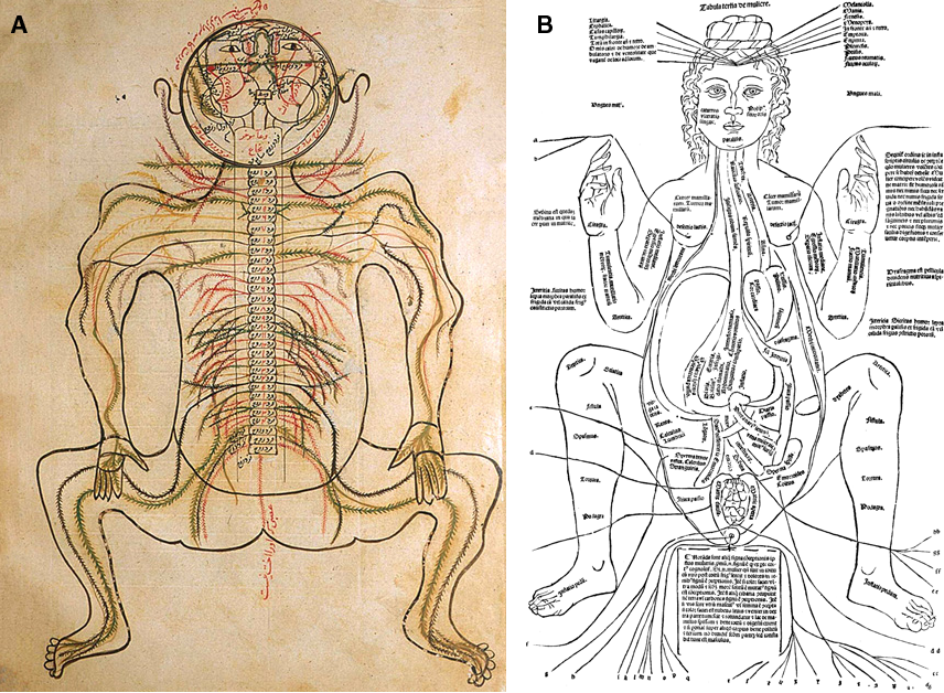 Figure 3 From A Brief History Of Topographical Anatomy Semantic