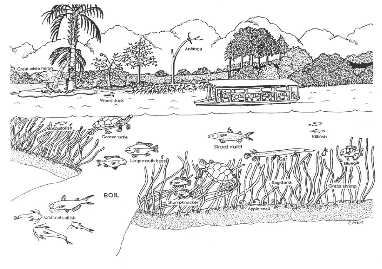 thomas meus software ecosystems pdf