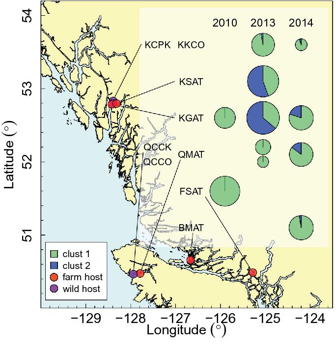 A 200K SNP chip reveals a novel Pacific salmon louse