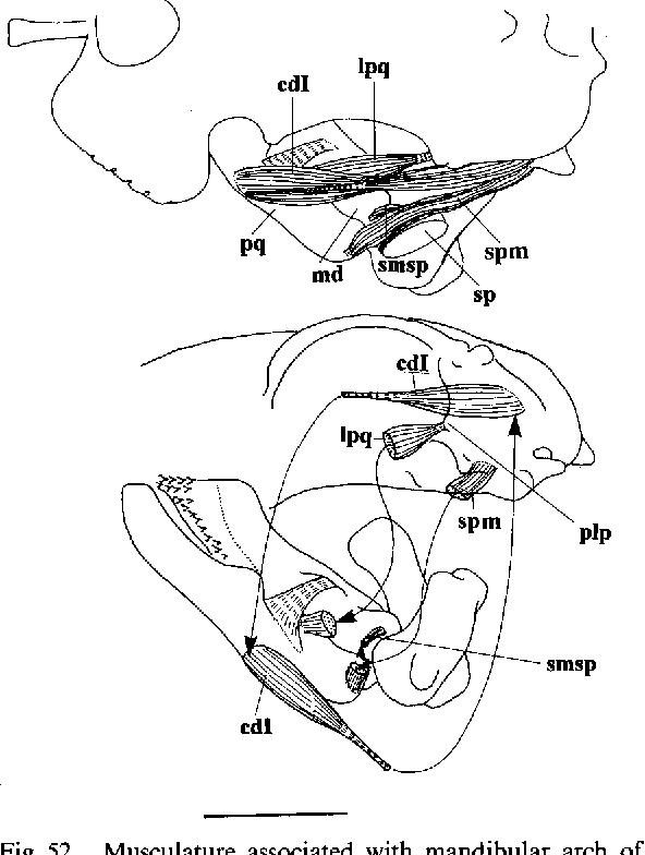 mazda gf wiring diagram