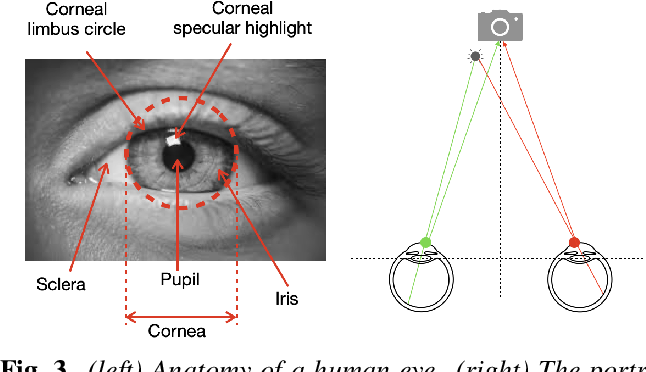 Figure 3 for Exposing GAN-generated Faces Using Inconsistent Corneal Specular Highlights