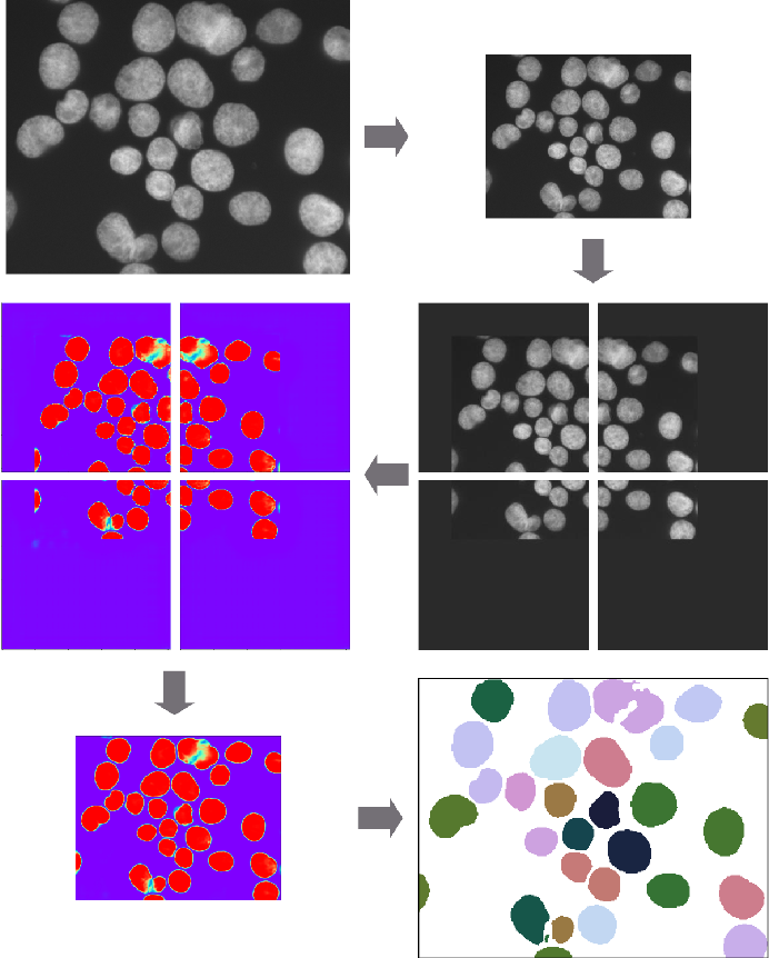 Figure 3 for Deep Learning architectures for generalized immunofluorescence based nuclear image segmentation