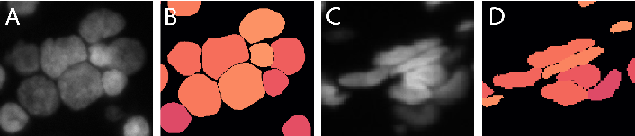 Figure 1 for Deep Learning architectures for generalized immunofluorescence based nuclear image segmentation