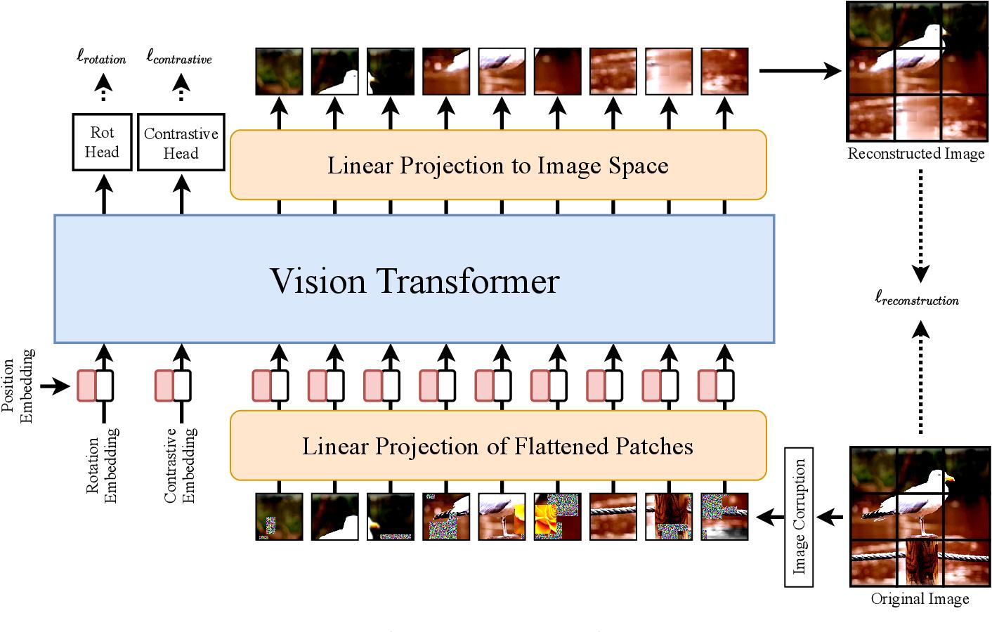 Figure 1 for SiT: Self-supervised vIsion Transformer