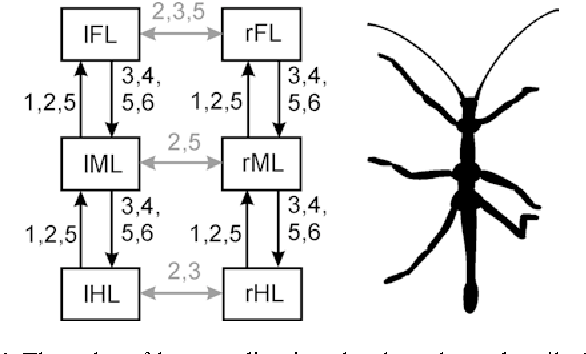 Mechanisms Of Stick Insect Locomotion In A Gap Crossing Paradigm