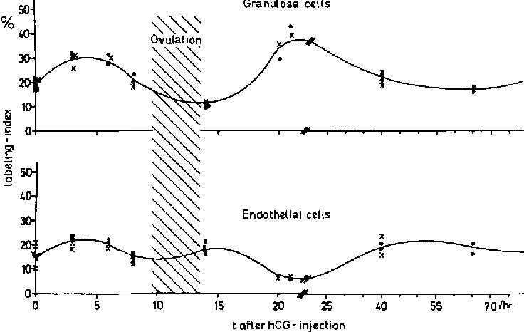 Follicle growth in the ovary of the rabbit after ovulation-inducing