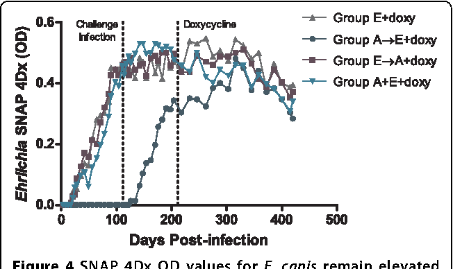 Experimental infection and co infection of dogs with Anaplasma