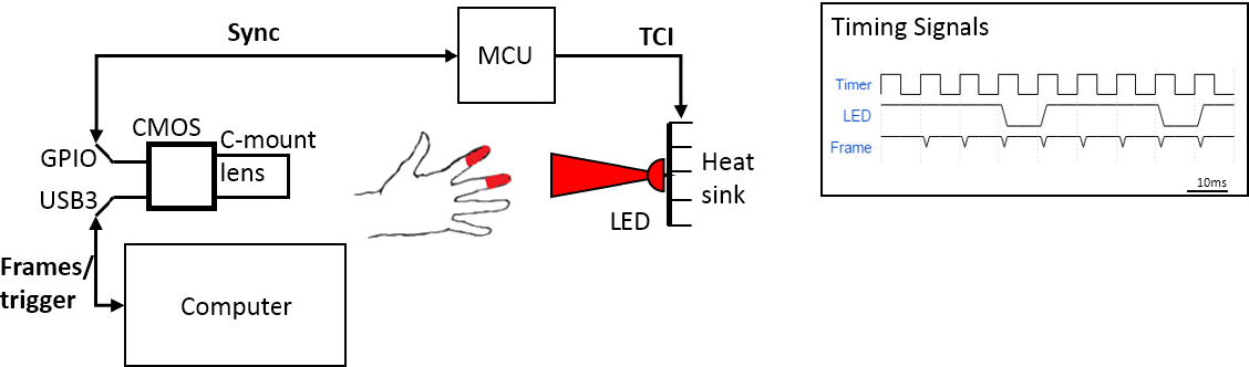 Figure 1 for Non-contact transmittance photoplethysmographic imaging (PPGI) for long-distance cardiovascular monitoring
