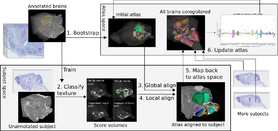Figure 2 for The Active Atlas: Combining 3D Anatomical Models with Texture Detectors