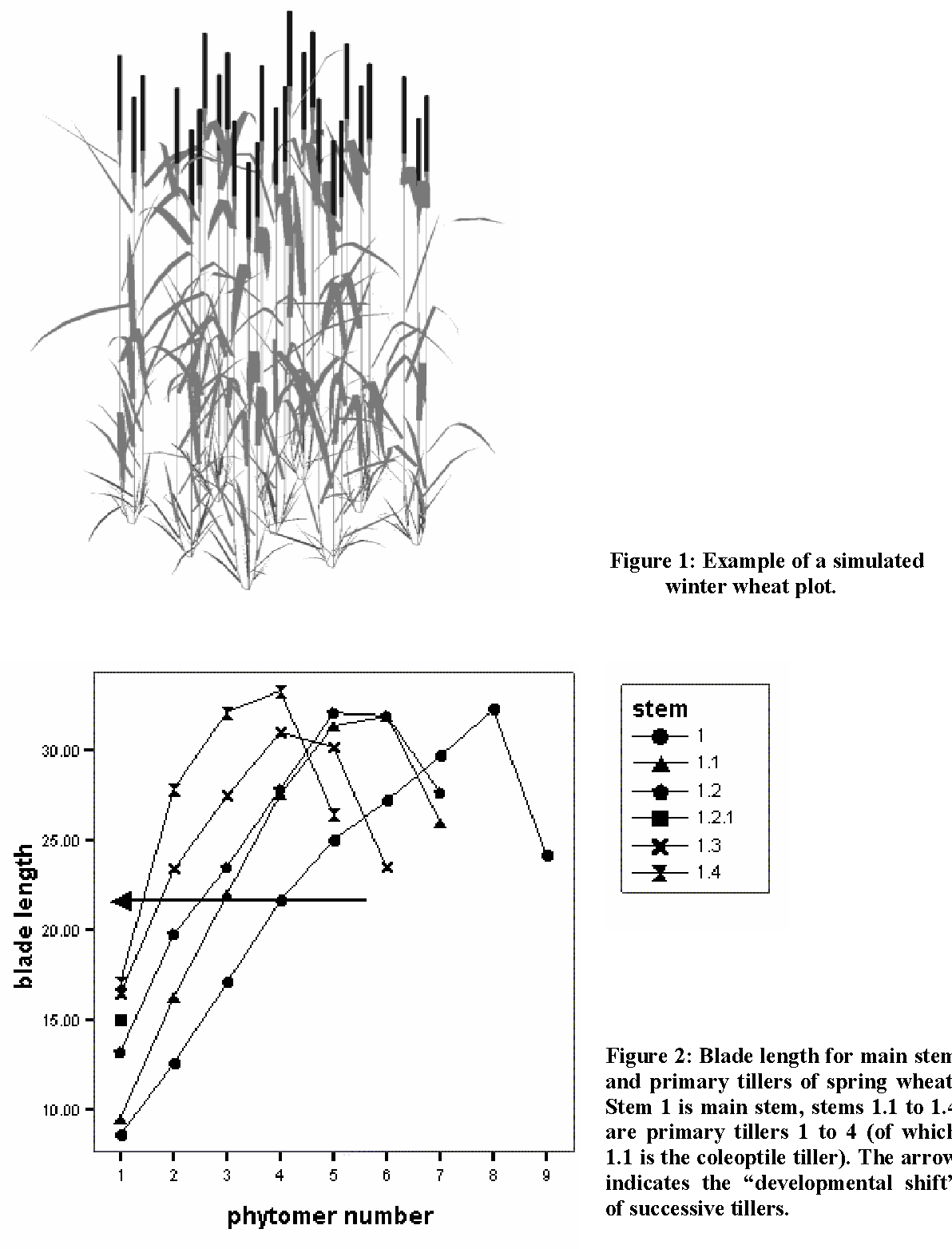 Figure 2 from A 3 D approach for modelling tillering in