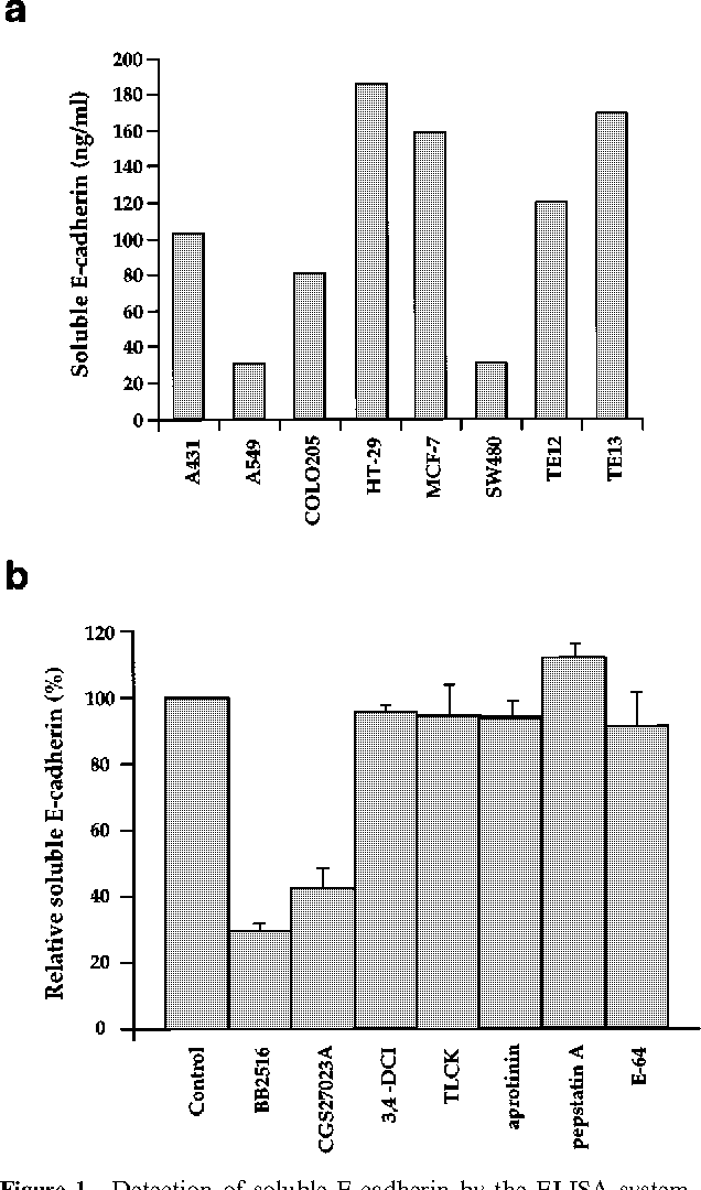 Figure 1 Detection of soluble E-cadherin by the ELISA system. (a) Soluble E-cadherin in culture supernatants of various cancer cell lines. Four thousand cells were cultured in serum-free medium for 24 h, and soluble E-cadherin in the cell-free supernatants was detected by ELISA. (b) E ect of protease inhibitors on the release of soluble E-cadherin. A431 cells were incubated for 12 h at 378C in the absence (control) or presence of various protease inhibitors, as indicated. Final concentrations of the agents added were as follows: BB2516 (marimastat), 100 mM; CGS27023A, 100 mM; 3,4- dichloroisocoumarin (DCI), 100 mM; N a-p-tosyl-L-lysine chloromethyl ketone (TLCK), 0.2 mg/ml; aprotinin, 2 mg/ml; pepstatin A, 100 mM; trans-Epoxysuccinyl-L-leucylamido(4-guanidino) butane (E-64), 10 mM and the cell-free supernatants were analysed for soluble E-cadherin using an ELISA system. Columns and bars represent mean and s.d. obtained from three independent experiments
