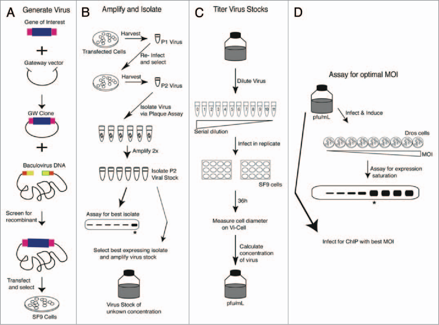 Figure 1 from Baculovirus-encoded protein expression for