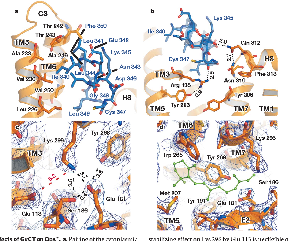 Figure 4 From Crystal Structure Of Opsin In Its G-protein
