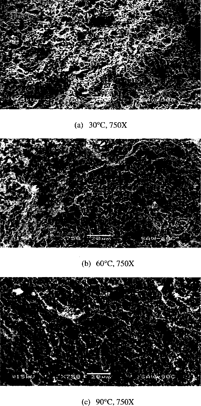 Figure 4.54 SEM Micrographs of Specimens Tested in Neutral Solution