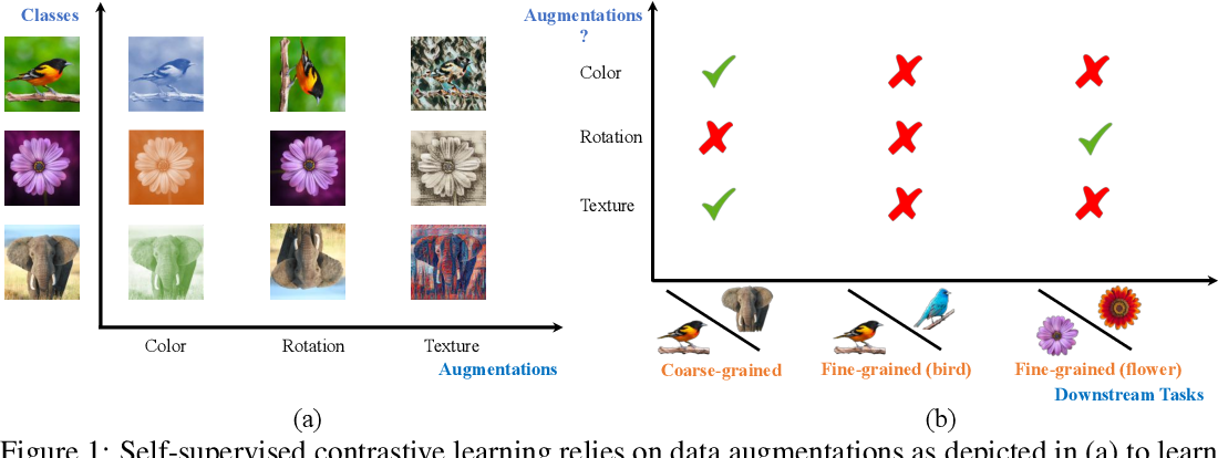 Figure 1 for What Should Not Be Contrastive in Contrastive Learning