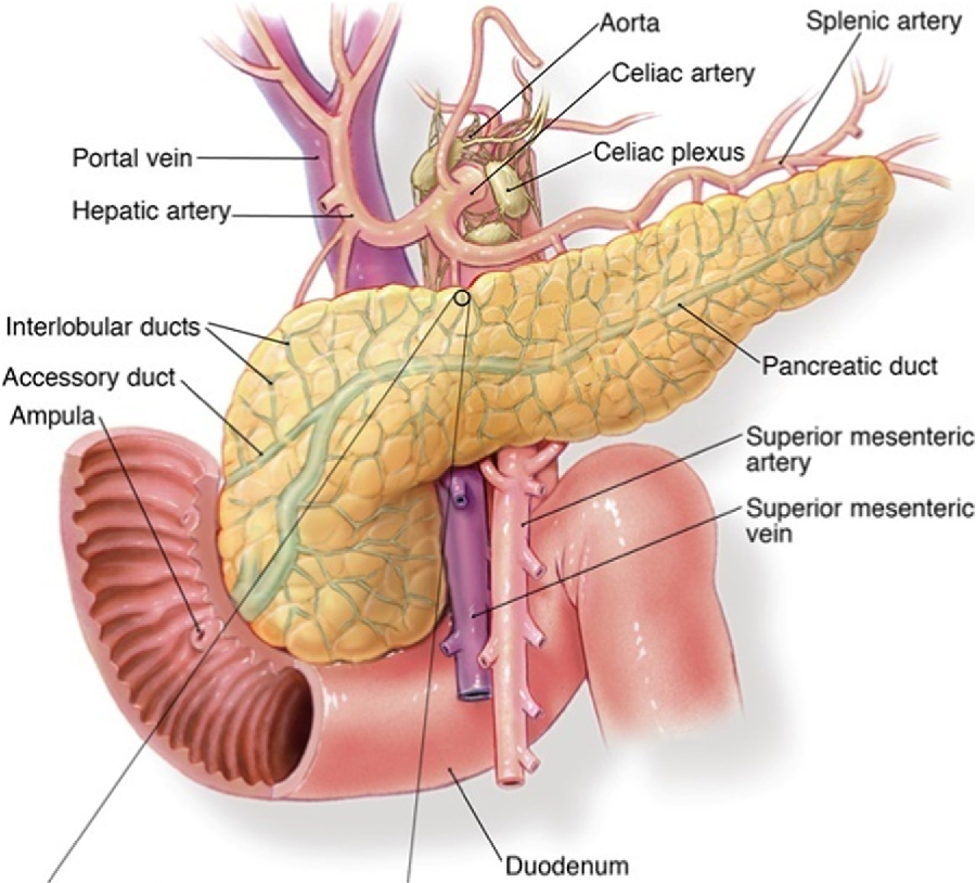 Pancreatic cancer: a comprehensive review and update. - Semantic Scholar