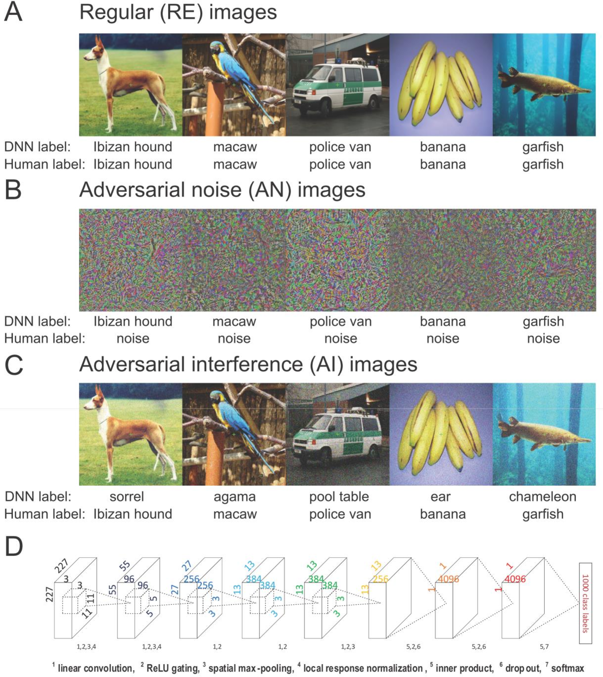 Figure 1 for Dissociable neural representations of adversarially perturbed images in deep neural networks and the human brain