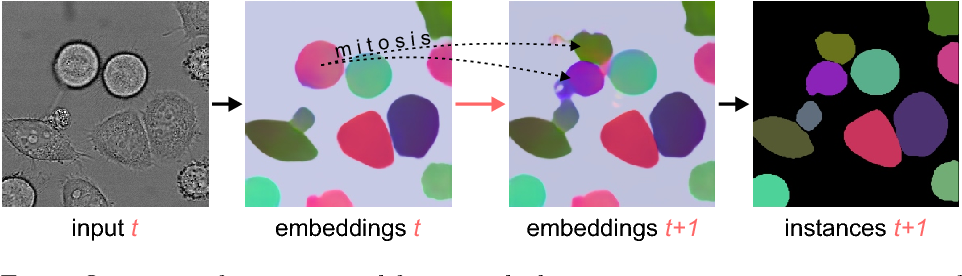 Figure 1 for Instance Segmentation and Tracking with Cosine Embeddings and Recurrent Hourglass Networks