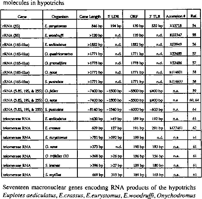 Table 2. Characteristics of 17 RNA-encoding macronuclcar gene-sized molecules in hypotnchs
